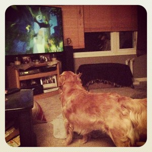 she loves to watch tv. esp anything with animals... dog shows and the dog whisperer